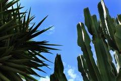 Blue sky and cactus landscape. In the dessert of Almeria, Spain Stock Photos