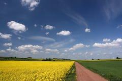 Blue sky and canola fields. stock photos