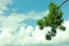 Blue sky-cloud Stock Images