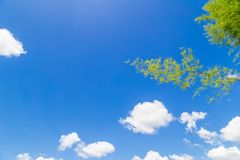 Blue sky and cloud with bamboo branch Royalty Free Stock Photos