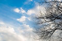 Blue sky with cloud and bough of tree. Beautiful natural of sky and tree abstract or background Stock Photo