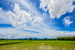 Blue sky and cloud with rice field below, thailand Stock Images