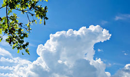 blue sky and cloud Stock Image