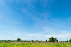 Blue sky and cloud with tree. Royalty Free Stock Photography