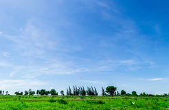 Blue sky and cloud with tree. Stock Image