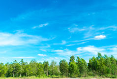 Blue sky and cloud with tree. Royalty Free Stock Images