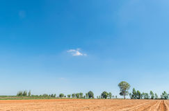 Blue sky and cloud with tree. Royalty Free Stock Image