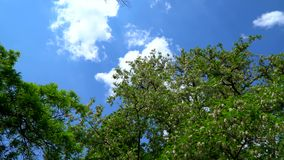Blue sky with clouds. stock video footage
