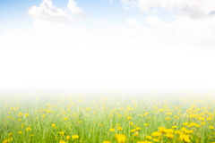 Blue sky with clouds and a field of flowers. Royalty Free Stock Photo