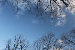 Blue sky with clouds framed by tree twigs stock images