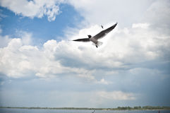 Blue Sky with clouds and gulls Stock Image