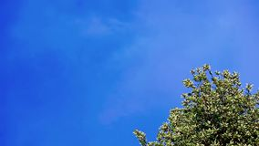 Blue sky without clouds landscape. Tree on blue sky background without clouds stock video footage