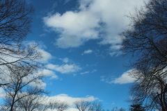 Blue Sky, Clouds and Moon framed by tall trees stock photos