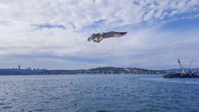 Blue sky, clouds, ocean and flaying seagull. Istanbul, Turkey - October 10, 2015 stock photos