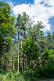 Blue sky with clouds. Over the forest Stock Photos