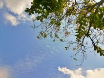Blue sky clouds and tree background Royalty Free Stock Images