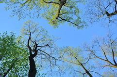 Blue sky, clouds, tree branches, the distance ,, spring, hope, hope Stock Photos