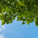 Blue sky with clouds and tree branches Stock Images