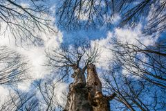 Blue Sky, Clouds and Tree Royalty Free Stock Photo