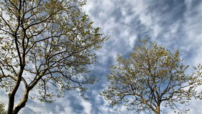 Blue sky with clouds and tree stock footage