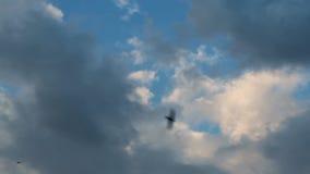 Blue sky clouds stock footage