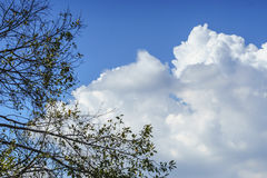 Blue sky with a cloudy day and a tree branch. Stock Photos