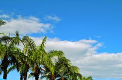 Blue sky and coconut tree Stock Photography