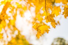 Beautiful autumn closeup landscape with autumn leaves and blurred background. Blue sky and colorful autumn leaves. Autumnal landscape under sunlight Stock Photography