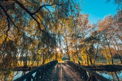 Beautiful autumn closeup landscape with autumn leaves and blurred background. Blue sky and colorful autumn leaves. Autumnal landscape under sunlight Stock Images