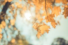 Beautiful autumn closeup landscape with autumn leaves and blurred background. Blue sky and colorful autumn leaves. Autumnal landscape under sunlight Stock Image