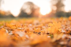 Beautiful autumn closeup landscape with autumn leaves and blurred background. Blue sky and colorful autumn leaves. Autumnal landscape under sunlight Royalty Free Stock Photos