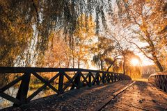 Beautiful autumn closeup landscape with autumn leaves and blurred background. Blue sky and colorful autumn leaves. Autumnal landscape under sunlight Stock Photos