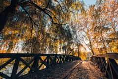 Beautiful autumn closeup landscape with autumn leaves and blurred background. Blue sky and colorful autumn leaves. Autumnal landscape under sunlight Stock Photo