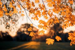 Beautiful autumn closeup landscape with autumn leaves and blurred background. Blue sky and colorful autumn leaves. Autumnal landscape under sunlight Royalty Free Stock Photo