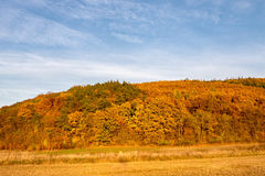 Blue sky and colorful autumnal forest Royalty Free Stock Photos