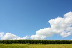 Blue Sky and Cornfield Royalty Free Stock Photos