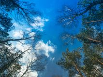 Blue sky among the crowns of trees stock photography