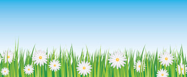 Blue sky and daisies. Full vector banner Stock Image