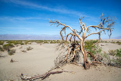 Blue sky day in the Death Valley National Park in Arizona Royalty Free Stock Photography