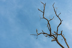 Blue sky dead tree Royalty Free Stock Images