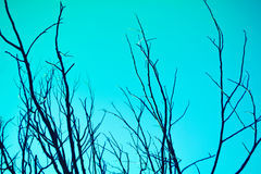 Blue sky and dry tree branches  background Stock Photos