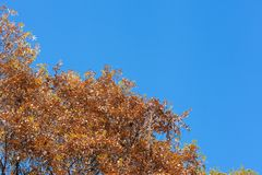 Blue sky of early winter and deciduous trees Stock Photography