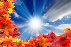 Blue sky and fall foliage frame Royalty Free Stock Image