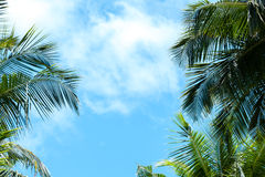 Blue sky with a few clouds and palm trees Stock Image