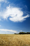 Blue Sky Field. Harvested golden field with unusual cloud formation in blue sky Royalty Free Stock Photos