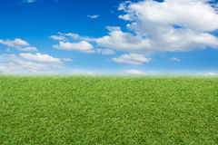 Blue sky. Field of grass and blue sky Stock Photo