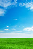 Blue sky and field of green grass Stock Photography