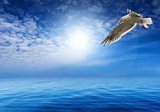 Blue sky and flaying seagull. Blue sky, ocean and flaying seagull Stock Photo