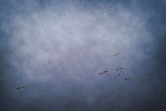 blue sky with flock of flying birds Royalty Free Stock Image