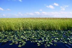 Blue sky in Florida Everglades wetlands stock image